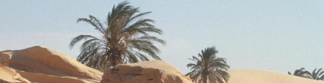 Palmeras desierto-3-recortada