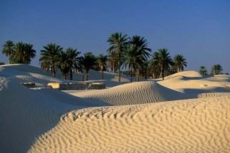 desierto y palmera-1