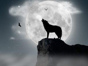 Lobo y luna-3