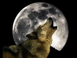 Lobo y luna-6