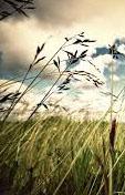 Dia de viento-8-Recortada
